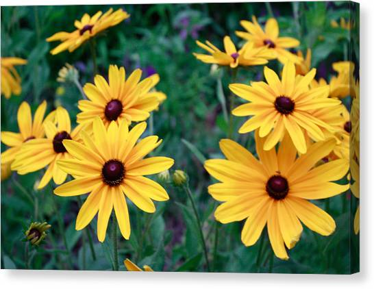 Yellow Daisy Flowers #2 Canvas Print