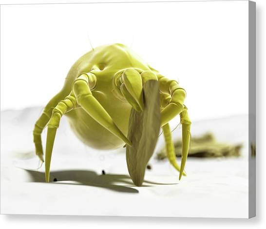 Dust Mite Canvas Print by Sciepro/science Photo Library
