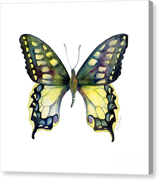 20 Old World Swallowtail Butterfly Canvas Print