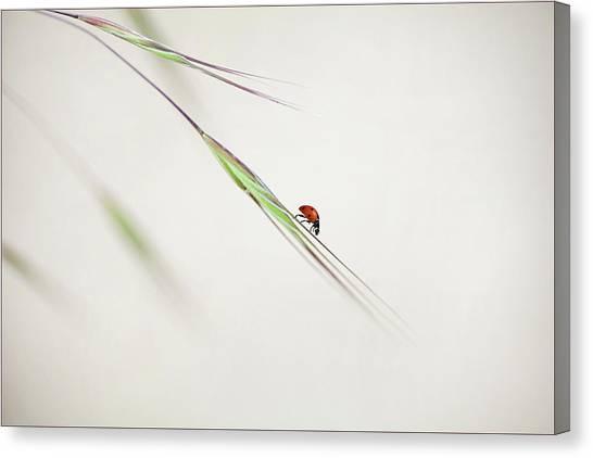 Ladybugs Canvas Print - ... by Anna Cseresnjes