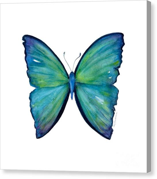 21 Blue Aega Butterfly Canvas Print
