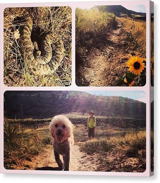 Rattlesnakes Canvas Print - Instagram Photo by S Teske