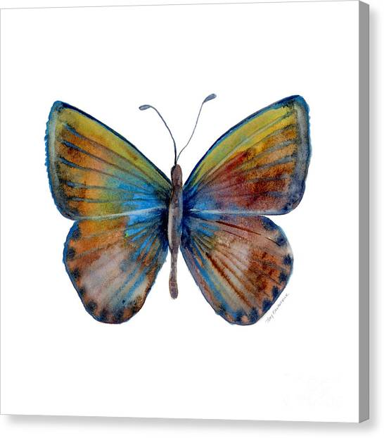 22 Clue Butterfly Canvas Print