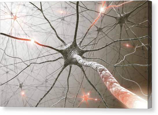 Neural Network Canvas Print by Ktsdesign/science Photo Library