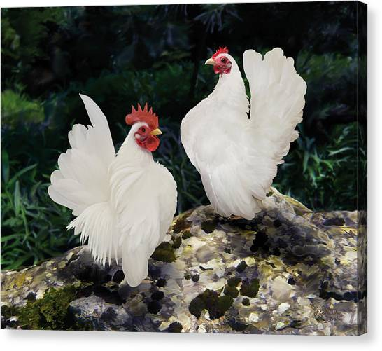 23. Pair White Serama Canvas Print