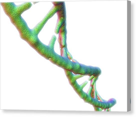 Dna Molecule Canvas Print by Alfred Pasieka/science Photo Library