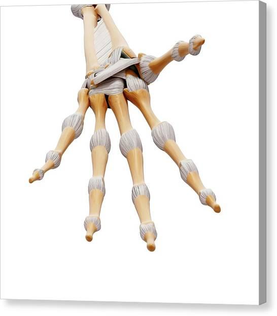 Human Hand Bones Canvas Print by Pixologicstudio/science Photo Library