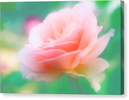 Rose (rosa Sp.) Canvas Print by Maria Mosolova/science Photo Library