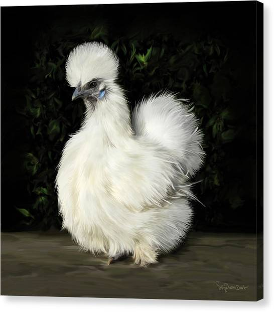 24. Tiny White Silkie Canvas Print