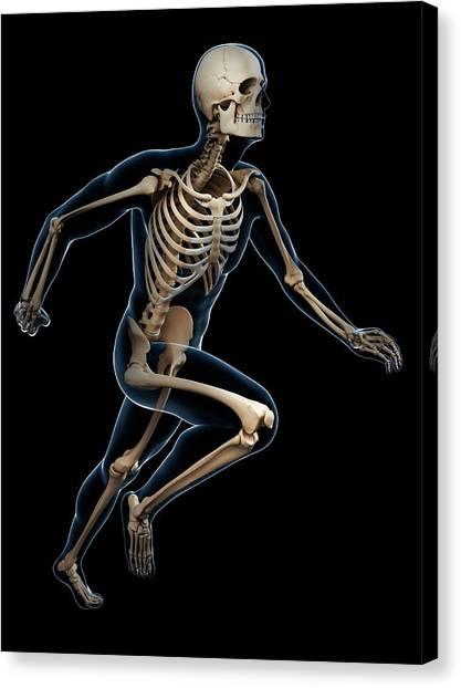 Skeletal System Of Runner Canvas Print by Sebastian Kaulitzki