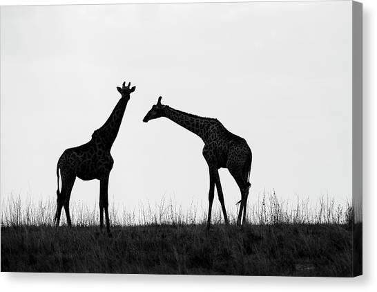 Kalahari Desert Canvas Print - Africa, Botswana, Chobe National Park by Paul Souders