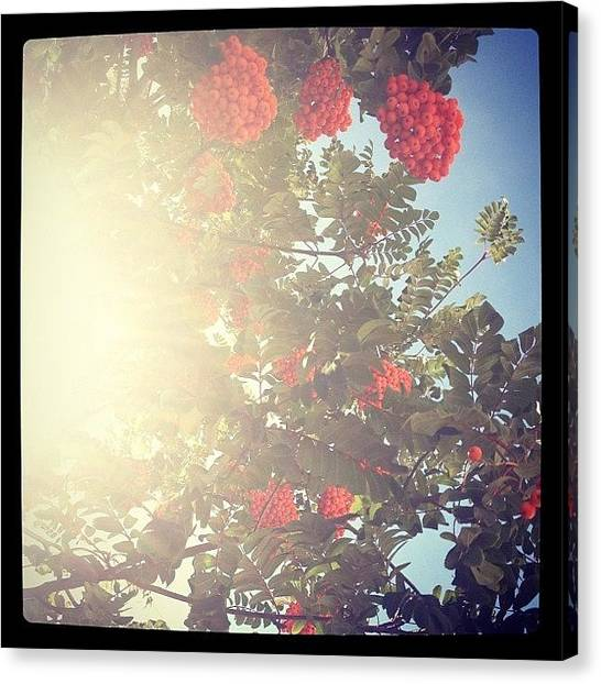 Fruit Trees Canvas Print - Instagram Photo by Jenna Lindquist