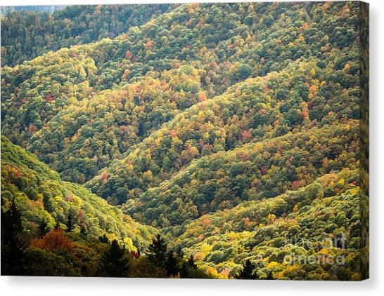 2678 Blue Ridge Parkway Canvas Print by Stephen Parker