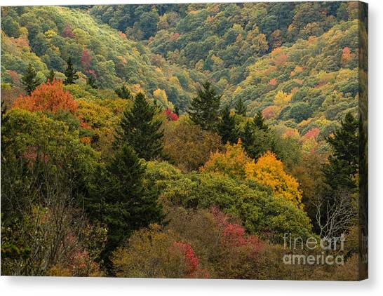 2681 Blue Ridge Parkway Canvas Print by Stephen Parker