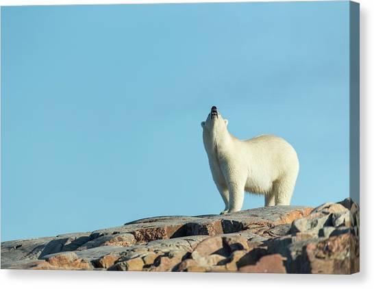 Nunavut Canvas Print - Canada, Nunavut Territory, Repulse Bay by Paul Souders