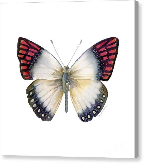 27 Magenta Tip Butterfly Canvas Print