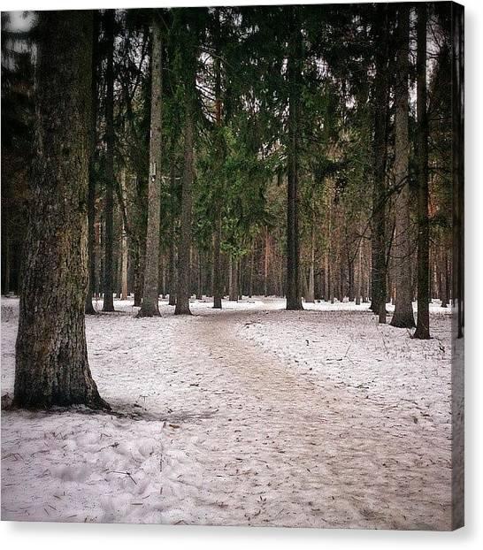 Forest Paths Canvas Print - Утренний парк #муром by Sergey Makarov