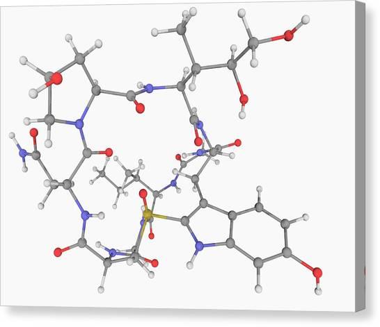 Alpha-amanitin Toxin Molecule Canvas Print by Laguna Design/science Photo Library
