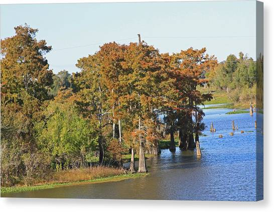 Atchafalaya Basin Canvas Print - Atchafalaya Basin In Louisiana by Ronald Olivier