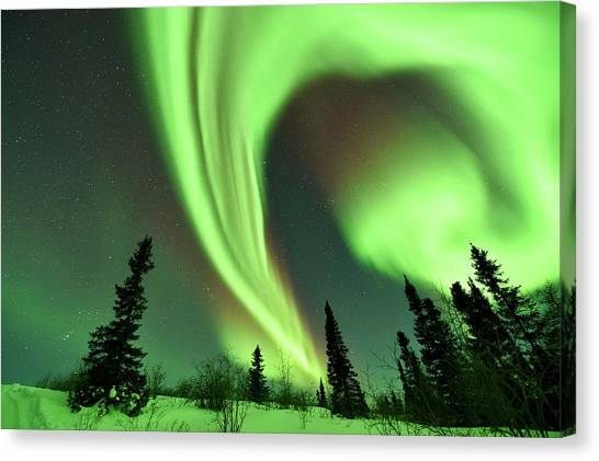 Aurora Borealis Over Trees Canvas Print by Dr P. Marazzi