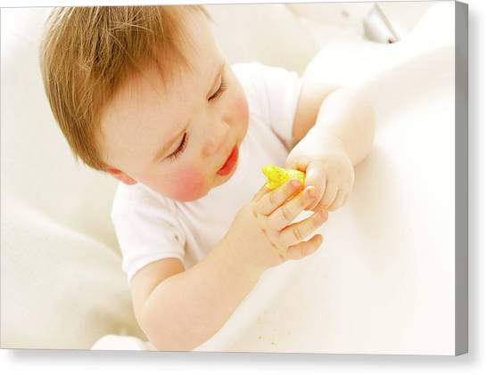 Baby Boy Eating A Crisp Canvas Print by Ruth Jenkinson/science Photo Library