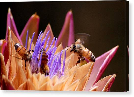 Bees In The Artichoke Canvas Print
