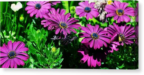 Blooms In Bloom Canvas Print by JAMART Photography