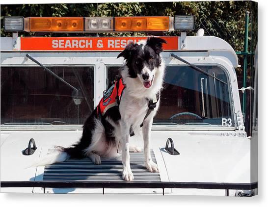 Border Collies Canvas Print - Border Collie Search And Rescue Dog (mr by Zandria Muench Beraldo
