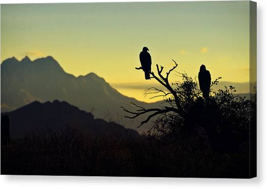 Condors Canvas Print - By Dawn's Early Light  by Saija  Lehtonen