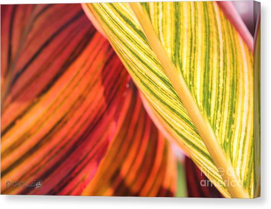 Canna Lily Named Durban Canvas Print