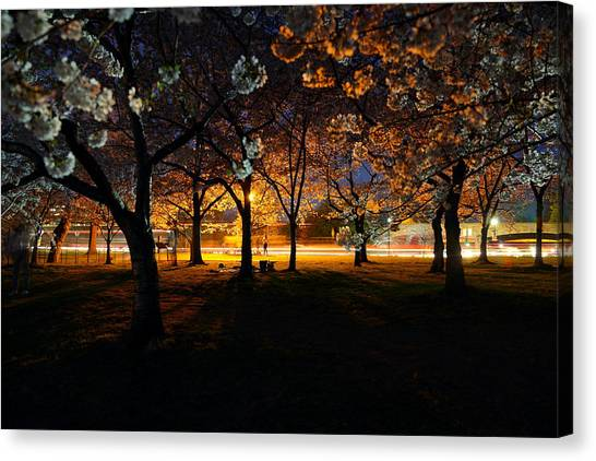 Cherry Blossoms At Night Canvas Print
