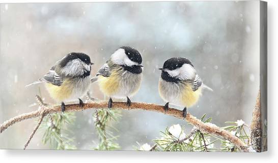Canvas Print - 3 Chickadees On A Snowy Day by Peg Runyan