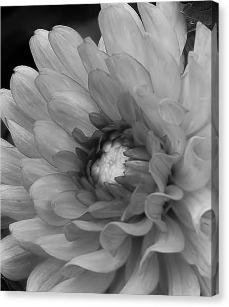 Amateurs Canvas Print Dahlia In Black And White By Bruce Bley