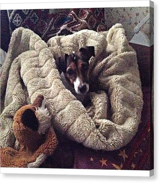 Foxes Canvas Print - #dogsofinstagram #mypooch #mags by Baz Twyman