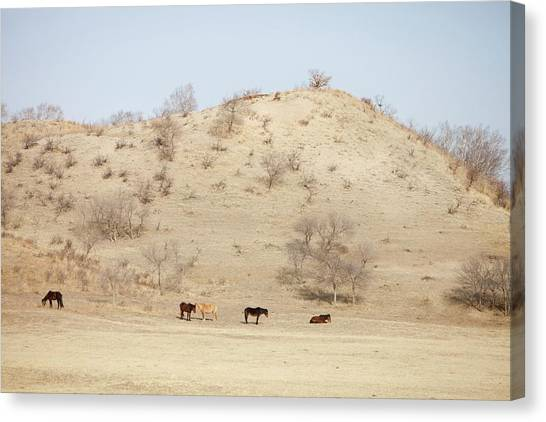 Climate Change Canvas Print - Drought by Ashley Cooper
