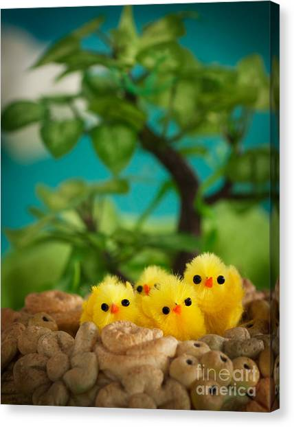 Easter Chicks Canvas Print by Mythja  Photography