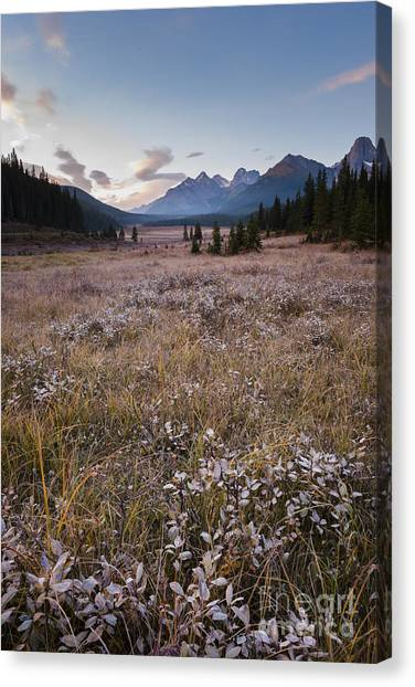 Engadine Meadow Canvas Print by Ginevre Smith