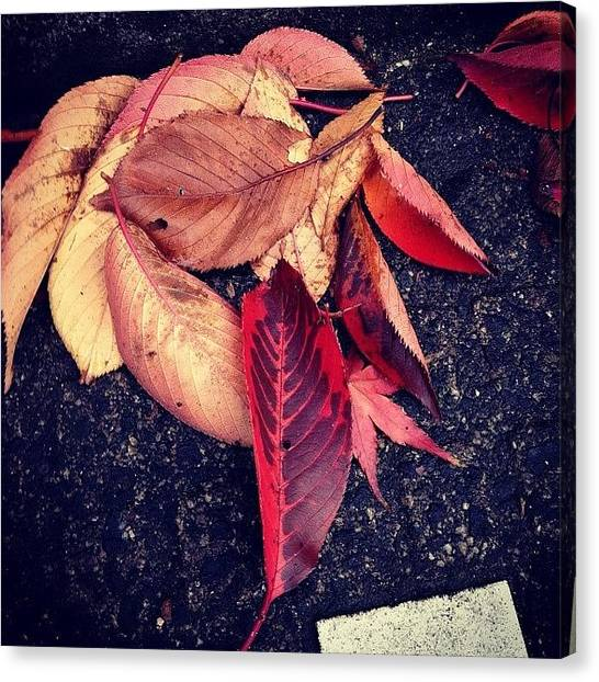 Autumn Leaves Canvas Print - #fallenleaves #leaf #leaves #nature by Yukiko Nobeno
