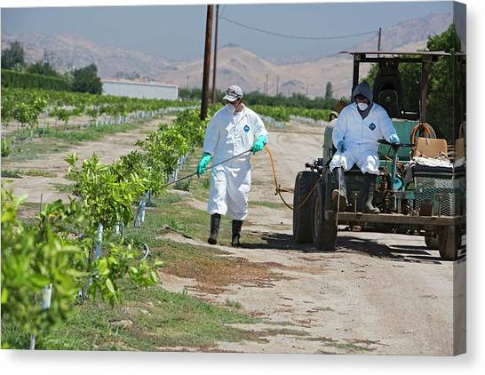 Protective Clothing Canvas Print - Farm Workers Applying Pesticide by Jim West