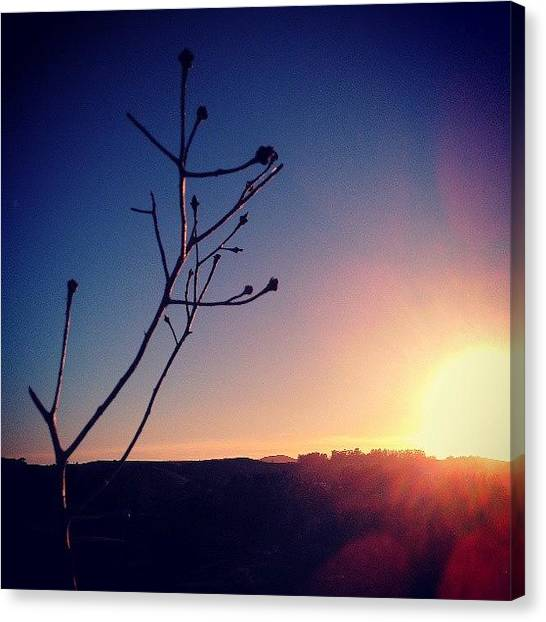 Sun Canvas Print - Final Rays by CML Brown