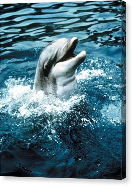 Flipper Canvas Print - Flipper  by Silver Screen