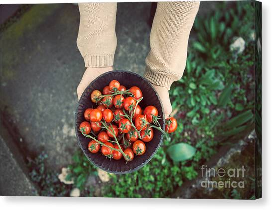 Tomato Canvas Print - Fresh Tomatoes by Mythja  Photography