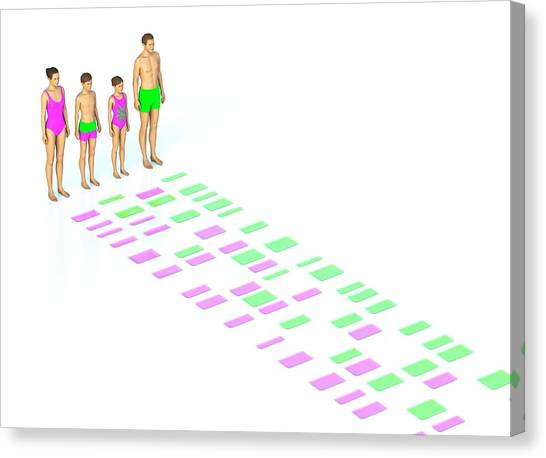 Genetic Relationships Of A Family Canvas Print by David Parker