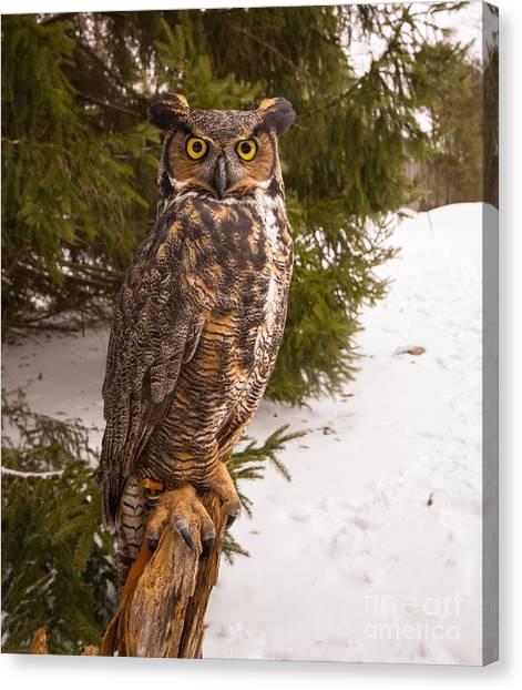Great Horned Owl Canvas Print by Simon Jones
