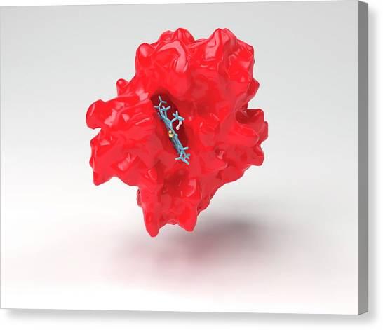 Molecular Biology Canvas Print - Haemoglobin Molecule by Indigo Molecular Images/science Photo Library