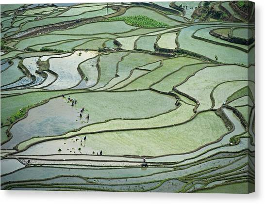 Hani Rice Terraces Near Yuanyang Canvas Print by Tony Camacho
