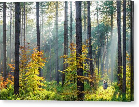 Limburg Canvas Print - Hiker In Hoge Kempen National Park by Jason Langley