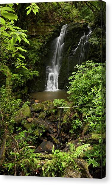 Horseshoe Falls Canvas Print - Horseshoe Falls, Matai Falls, Catlins by David Wall