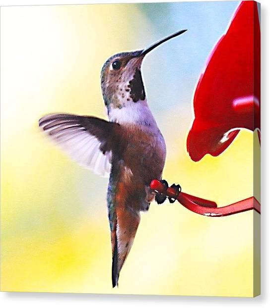 Ornithology Canvas Print - #hummingbird #bird #nature by Mark Jackson
