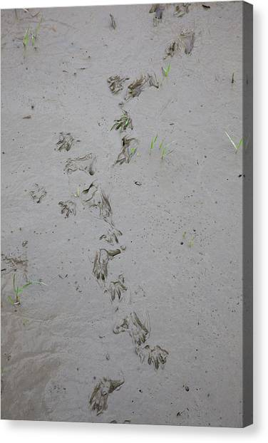 Ganges Canvas Print - India, West Bengal, Sunderbans National by Connie Bransilver